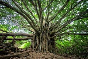 tree codes death damage
